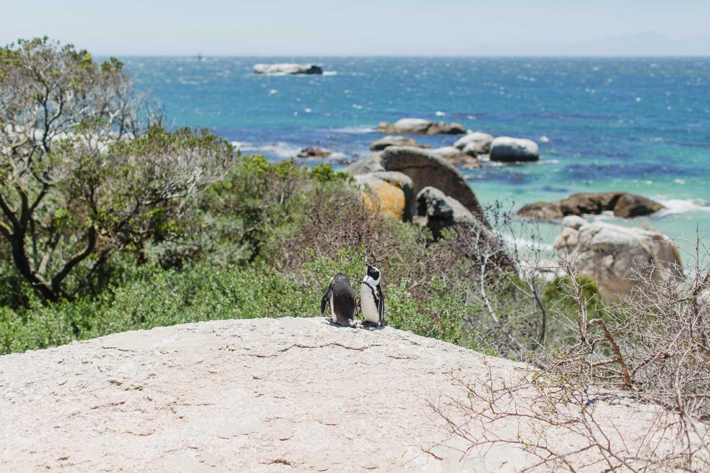 Vanessa_Esau_SouthAfrica_Capetown_Kapstadt_Travel (22)