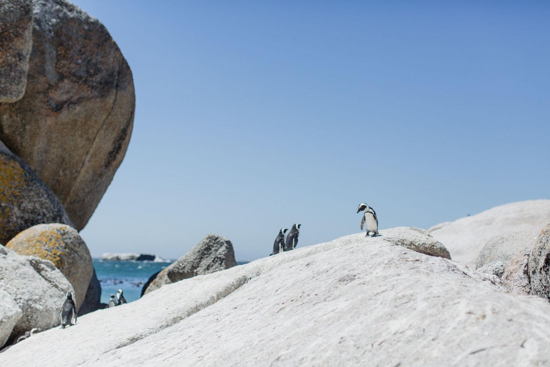 Vanessa_Esau_SouthAfrica_Capetown_Kapstadt_Travel (31)