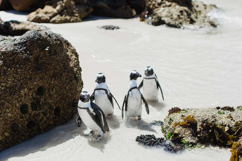 Vanessa_Esau_SouthAfrica_Capetown_Kapstadt_Travel (33)